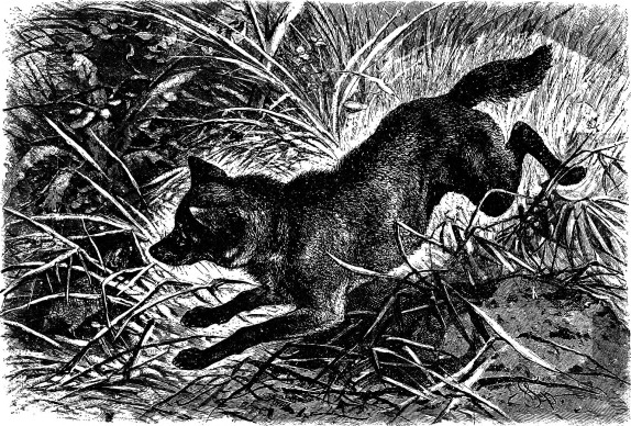 The_animals_of_the_world._Brehm's_life_of_animals;_(1895)_(20585949970).jpg